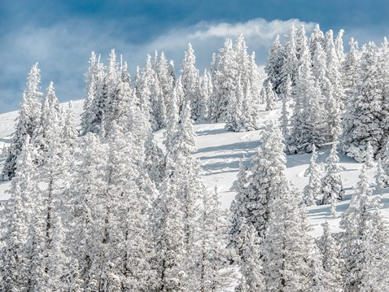 Colorado Snowy Mountain and Forest