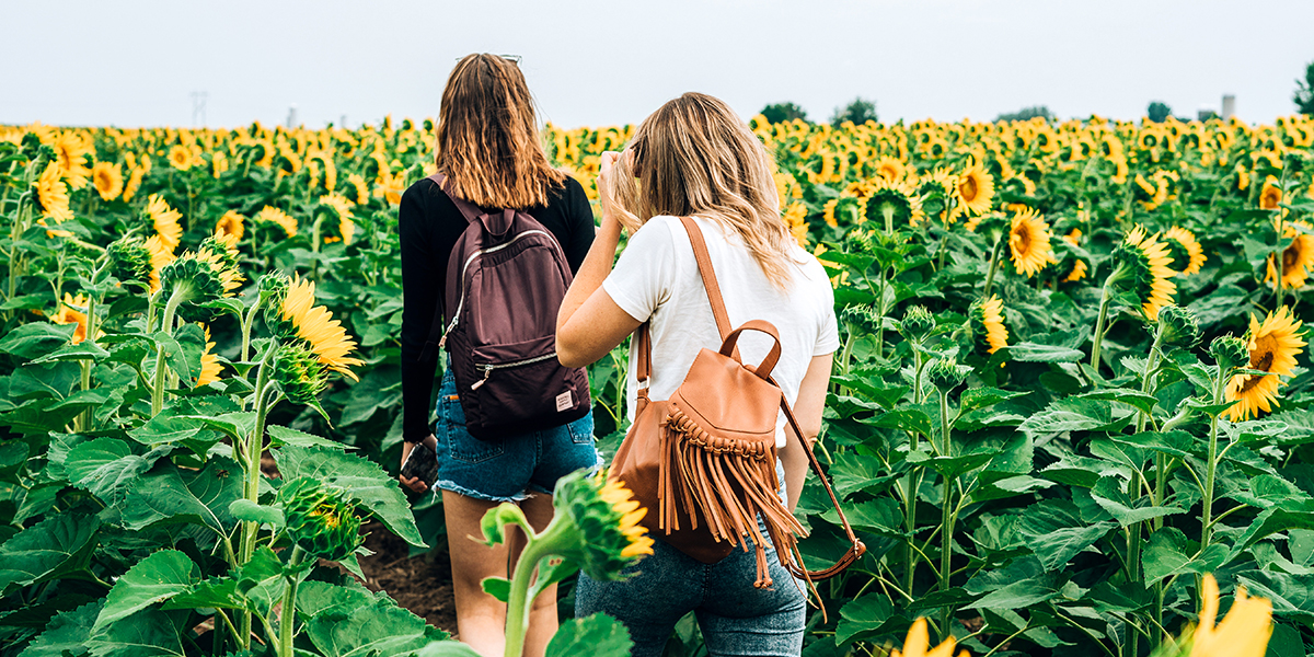 Two Women Walking Through a Field of Sunflowers.