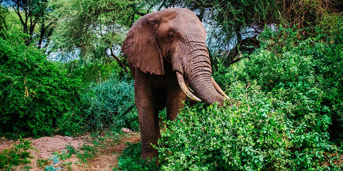 Wild Elephant African Safari Packing List