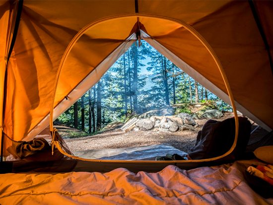 View from inside a tent looking into woods