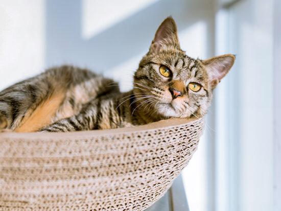 Cat in basket by a window.