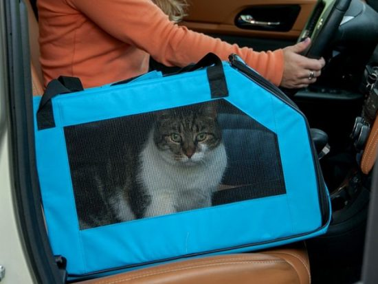 Pet Gear Signature Pet Car Seat & Carrier.