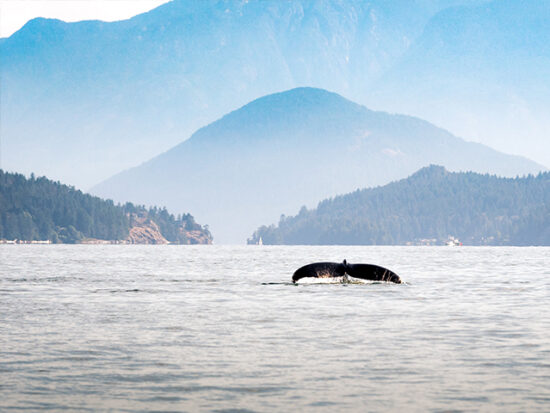 Whale sighting in Vancouver.
