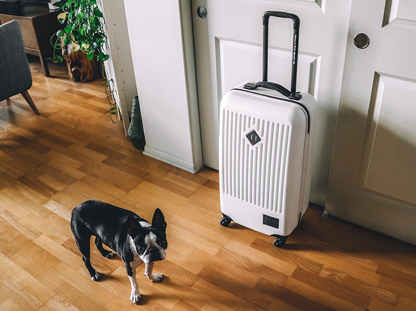 Carry-on suitcase packed with a dog standing next to it.